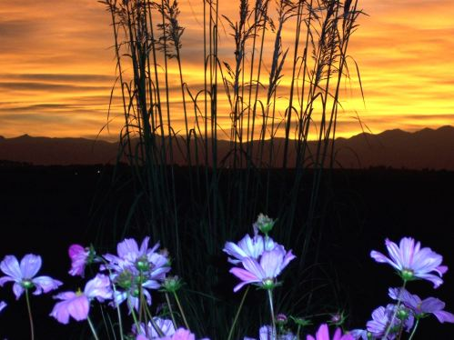 flowers, mountain sillouette, and sunset