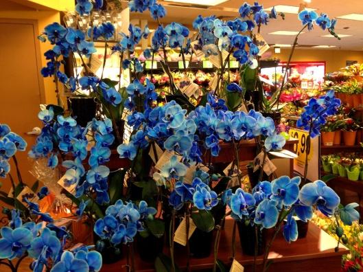 blue-orchids
